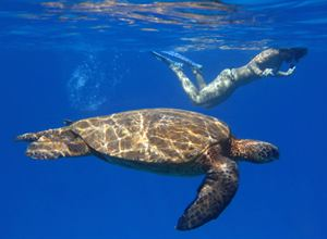 Snorkeling with sea turtles at secret under water site.